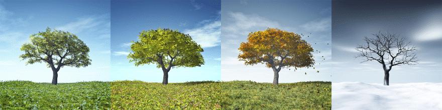 Wie die Jahreszeiten, kehren auch die saisonalen Trends Jahr ums Jahr wieder.